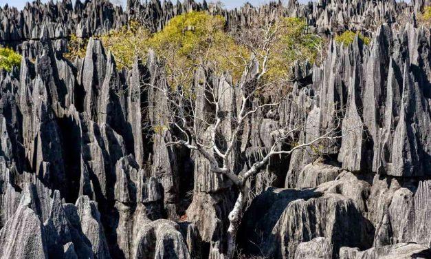 Road trip à Madagascar : quelle partie de l'île découvrir?
